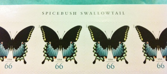 spice_bush_yellow_tail_butterfly_stamp