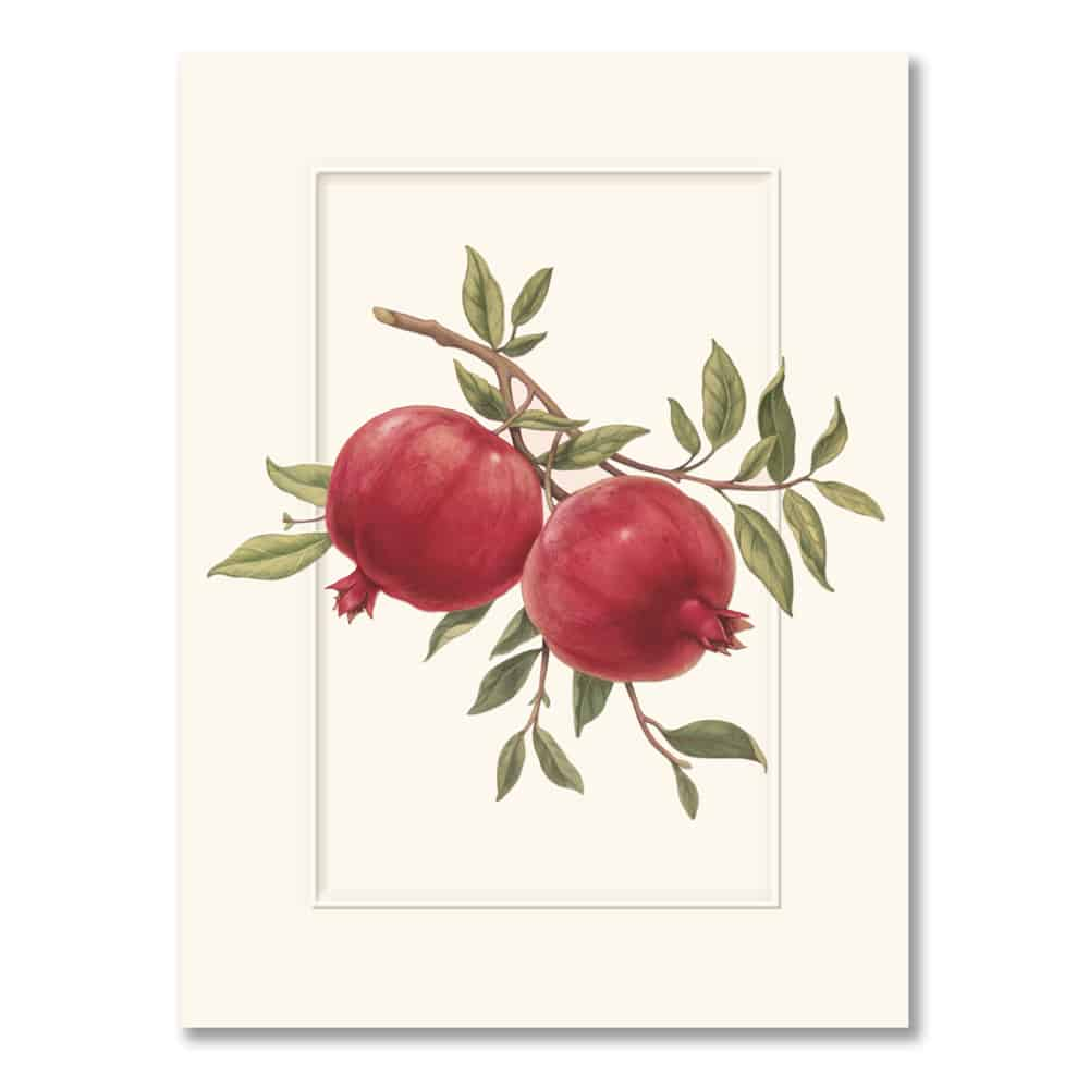 William Arthur Pomegranate Holiday Card